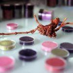 illustration dossier sur pigments naturels pour Dior